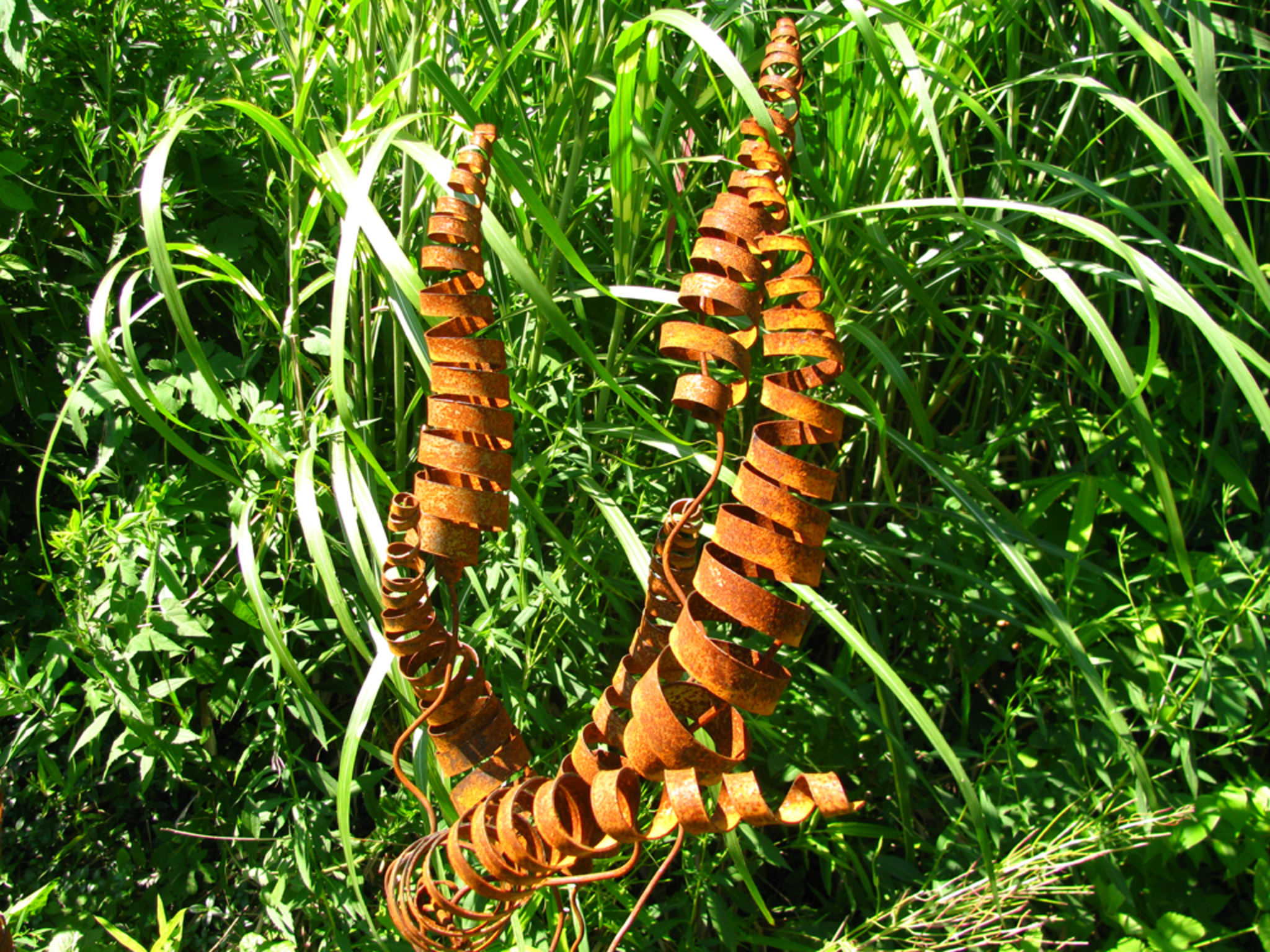 tiger tails